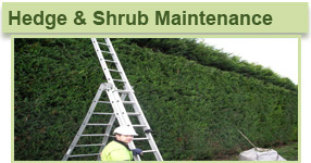home hedge maint
